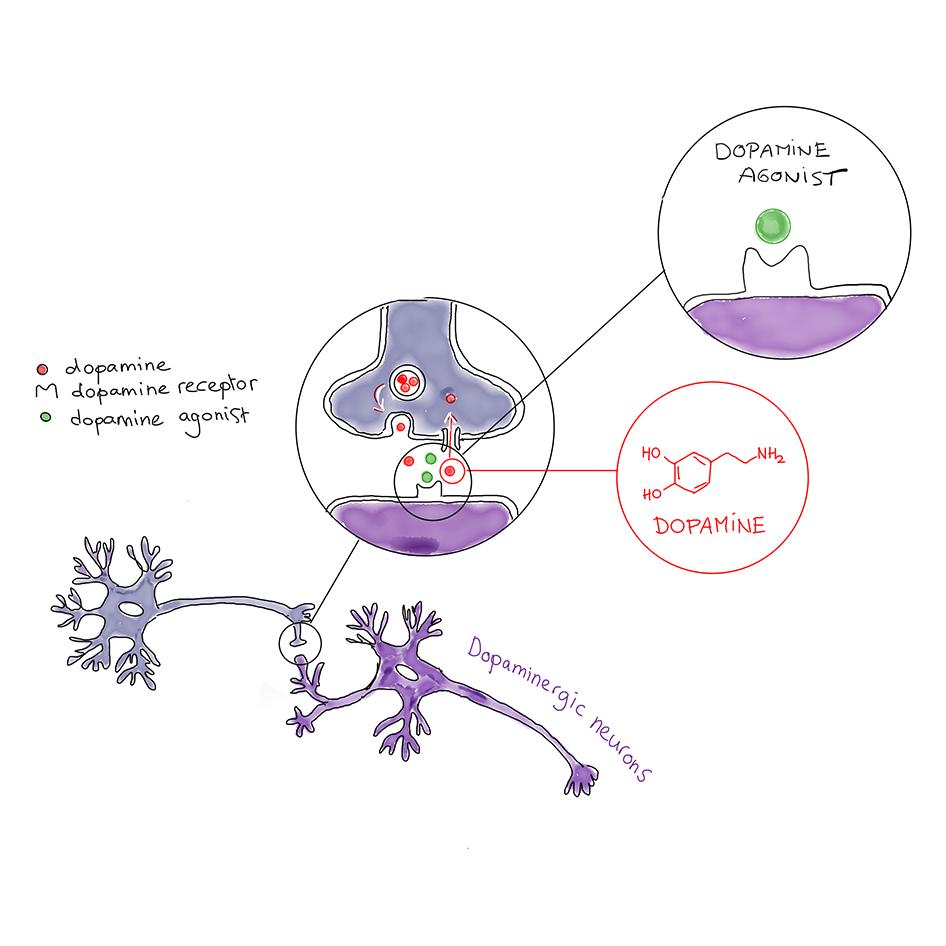 dopamineagonist_cc_by_sparks_vierkantv2